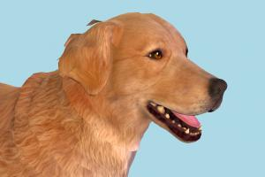Fallout 4 - Golden Retriever Dog