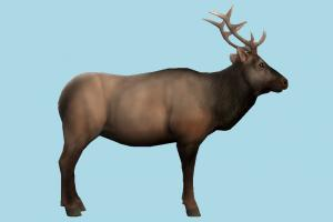 Elk deer, gazelle, elk, reindeer, animal, animals, wild, nature, mammal, ruminant, zoology, predator, prey