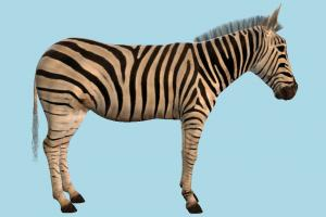 Zebra zebra, animal, animals, wild, nature, mammal, ruminant, zoology, africa, forest, jungle, predator, prey, high-poly