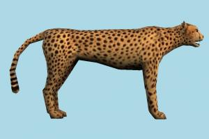 Tiger tiger, cheetah, leopard, tigers, animal, animals, wild, nature, mammal, ruminant, zoology, predator, prey, zoo, lowpoly