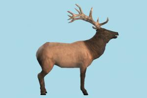 Elk elk, sheep, goat, bull, deer, gazelle, reindeer, animal, animals, wild, nature, mammal, ruminant, zoology, predator, prey