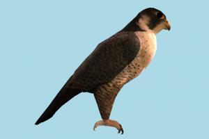 Falcon eagle, falcon, bird, air-creature, nature