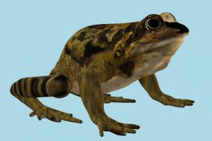 Frog frog, toad, sea-creature, sea, creature, nature