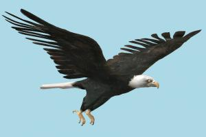 Eagle eagle, falcon, bird, air-creature, nature, predator, wild
