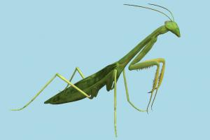 Praying Mantis mantis, grasshopper, bugs, insects, nature