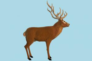 Deer deer, animal, animals, wild, nature, mammal, ruminant, zoology