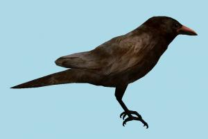 Crow Bird crow, rook, bird, raven, air-creature, nature