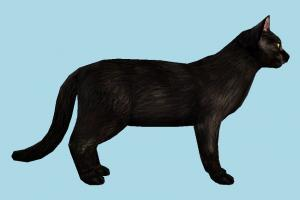 Cat cat, pet, animal, animals, nature, black