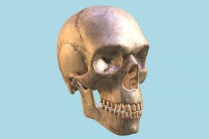 Ancient Skull skull, bones, bone, cranium, anatomy, skeleton, skeletal, medical, human, study, dead, death, jaw, ancient, creepy, science, halloween, horror, zombie
