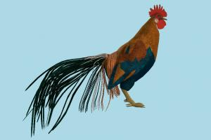 Rooster rooster, hen, chicken, poultry, bird, air-creature, nature