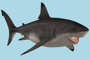 Shark shark, sea-creature, fishing, sea, fish, ocean, tooth, jaws, megalodon, miocene, ocean-creatures, carcharocles, white-shark