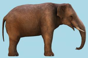 Elephant elephant, animal, animals, wild, nature, mammal, ruminant, zoology, africa, forest, jungle, ivory, safari, herbivore, creature, lowpoly