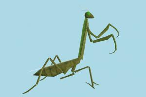 Mantis mantis, grasshopper, bugs, insects, nature