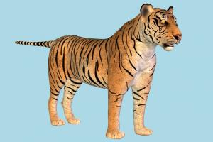 Tiger tiger, cheetah, leopard, tigers, jaguar, animal, animals, wild, nature, mammal, ruminant, zoology, predator, prey